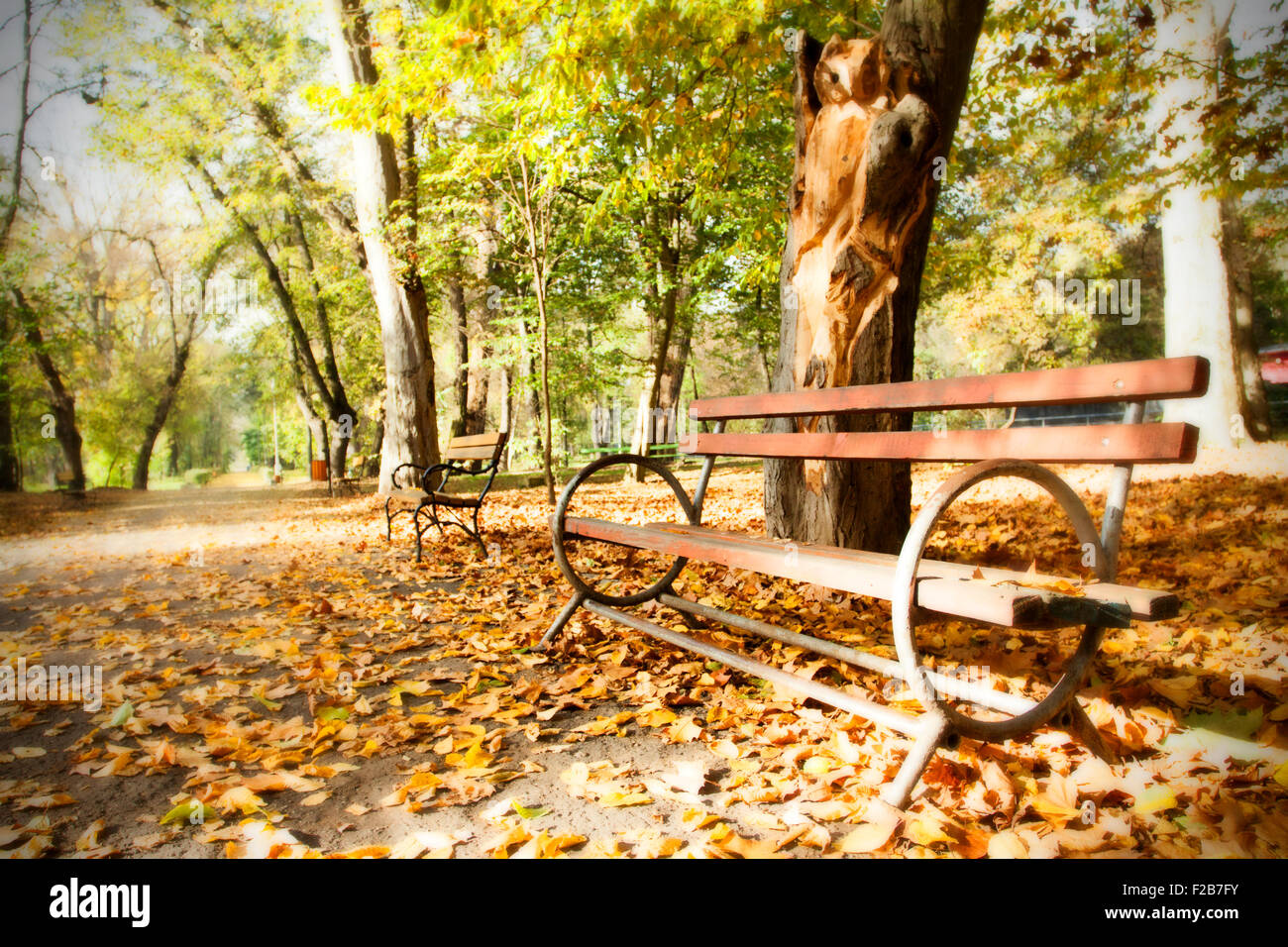 Wooden Bench In Autumn Park Vintage Photo Stock Photo