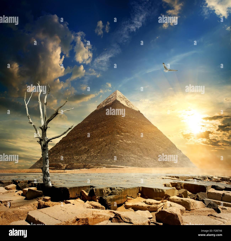 Big bird over pyramid and dry tree - Stock Image