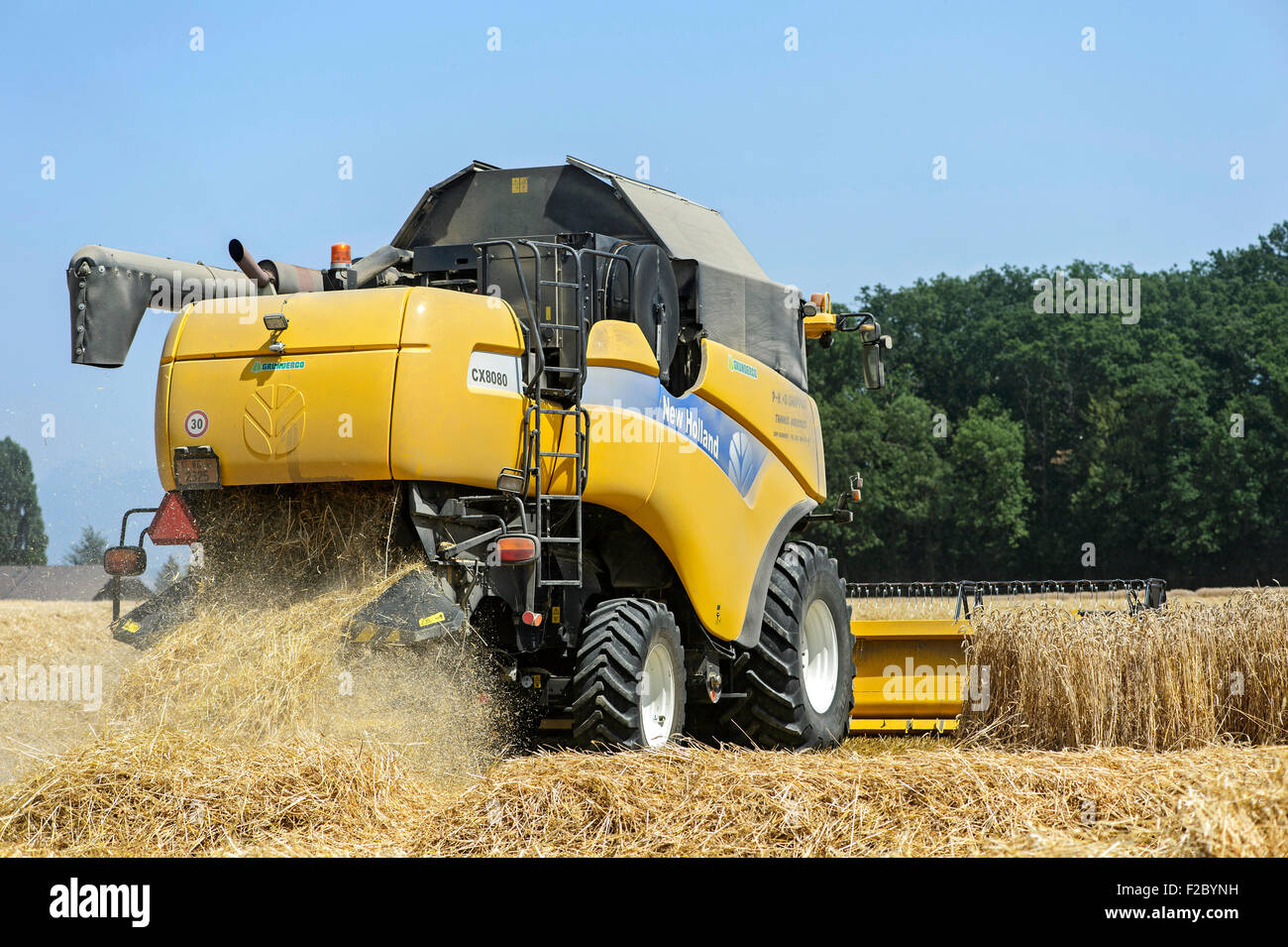 New Holland CX8080, combine harvester, harvesting winter wheat, Canton of Geneva, Switzerland - Stock Image