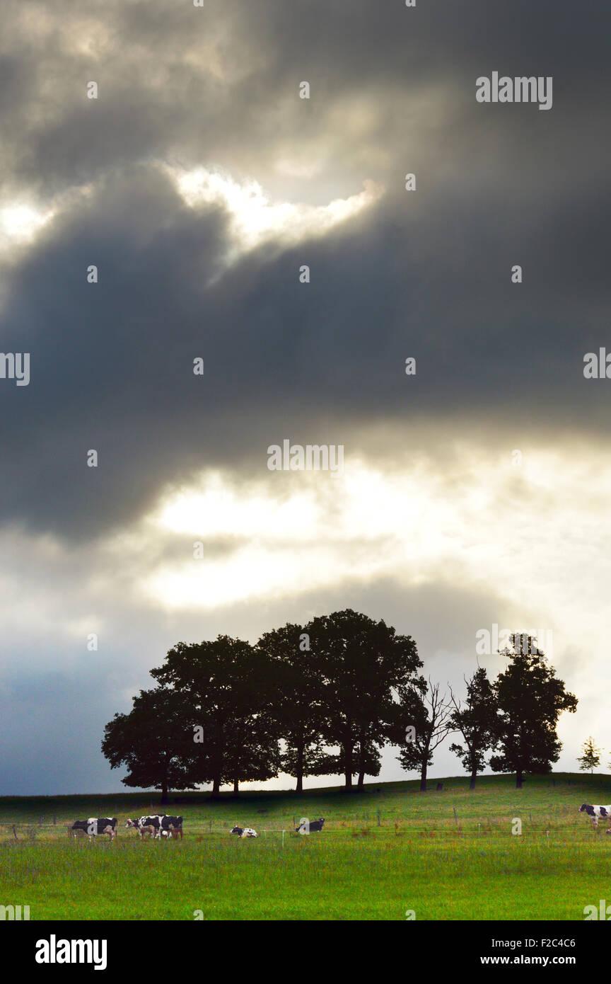 Dark sky above an Ardennes landscape - Stock Image