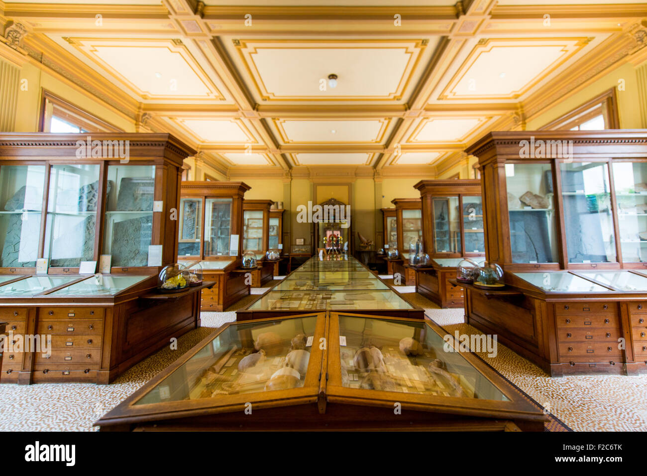 The Teylers Museum the art, natural history, and science museum in Haarlem, Netherlands, Stock Photo