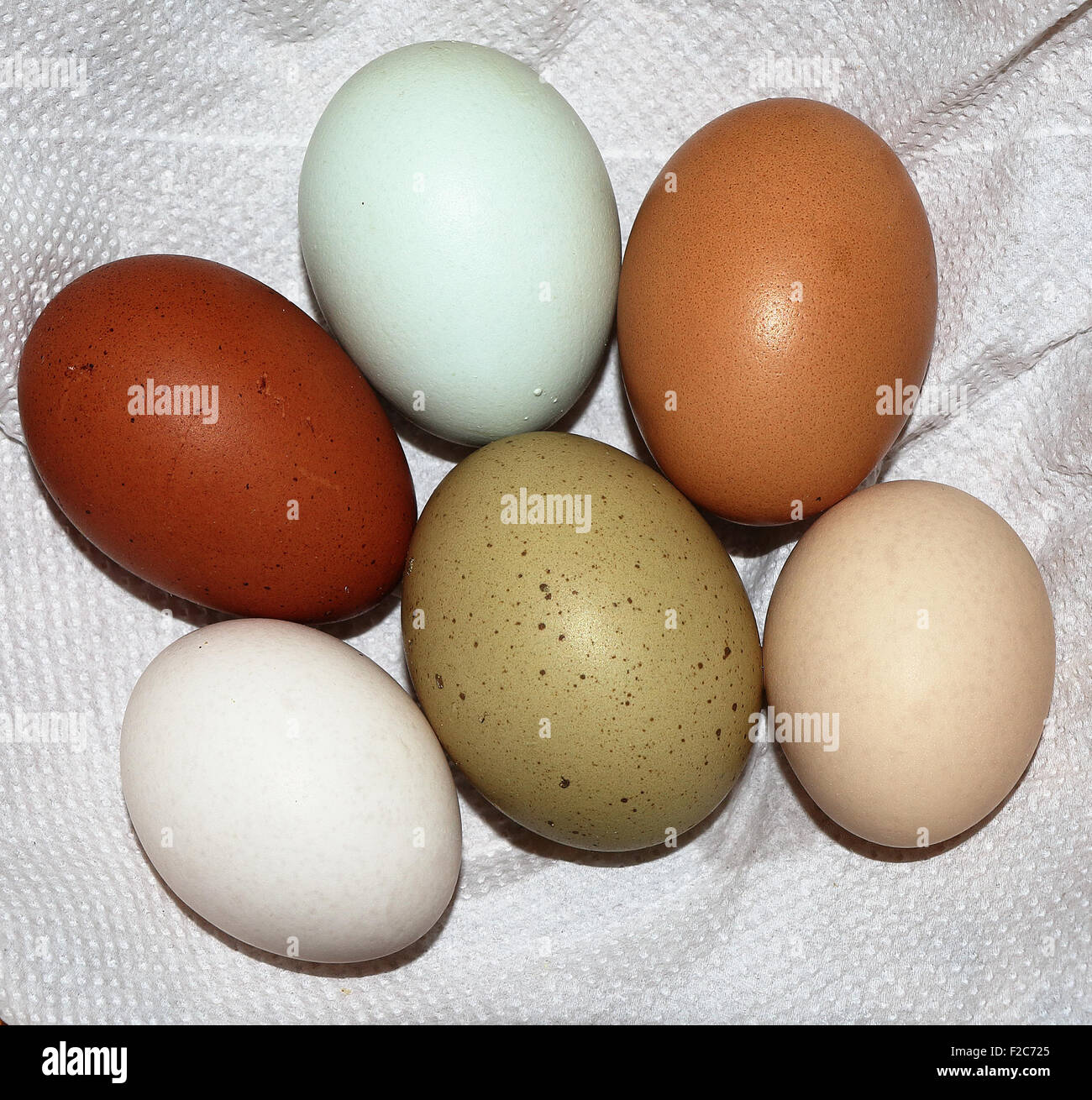 Six rare breed colourful chicken and duck eggs - Stock Image