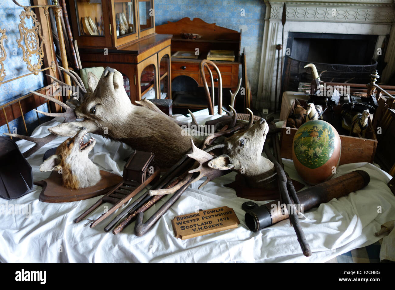 Junk room old odd objects stuffed animals animal heads stag deer collection at Calke Abbey - Stock Image