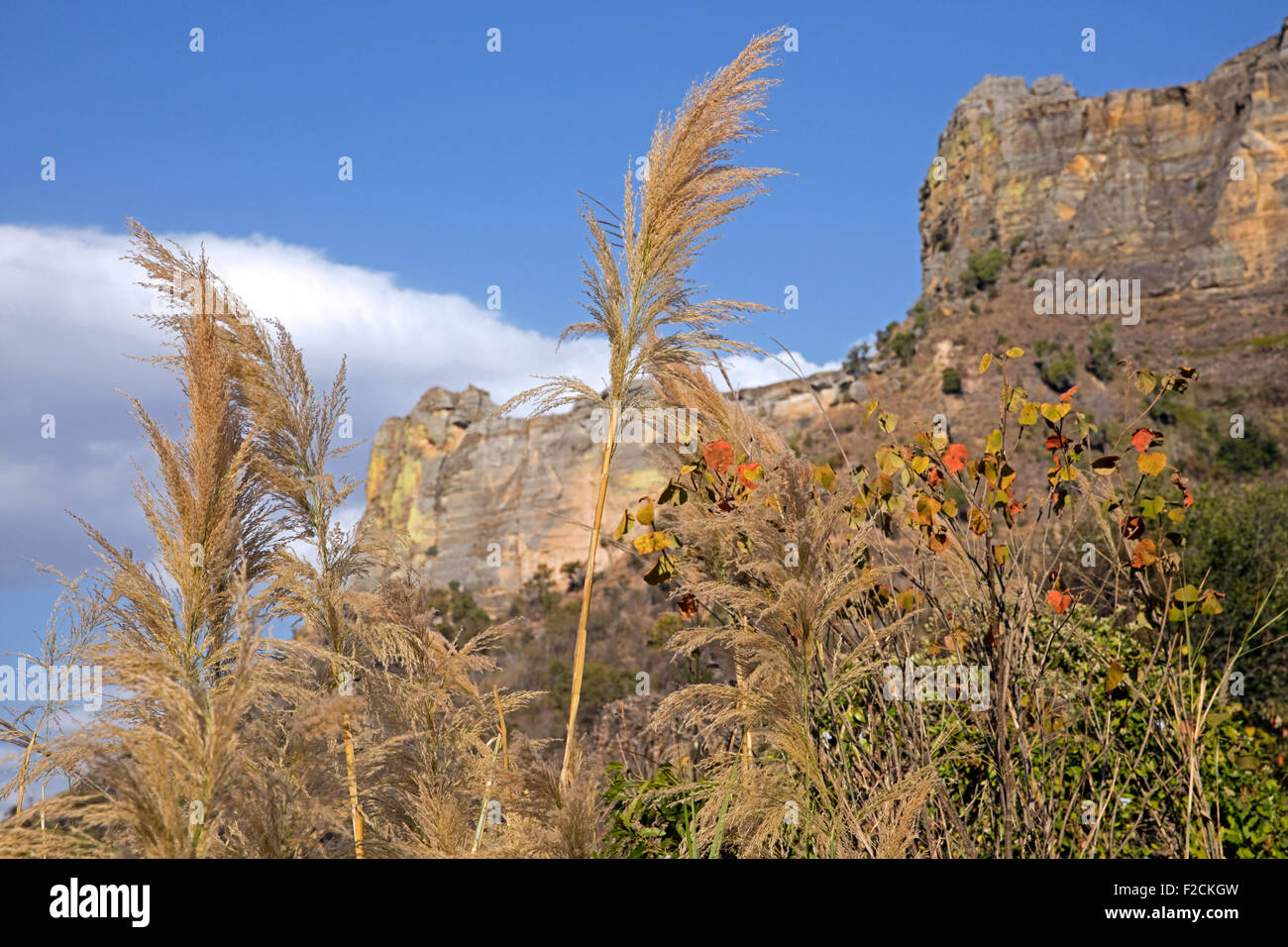 Eroded sandstone rock formations and tall grass in the Isalo National Park near Ranohira, Ihosy, Ihorombe, Madagascar, - Stock Image