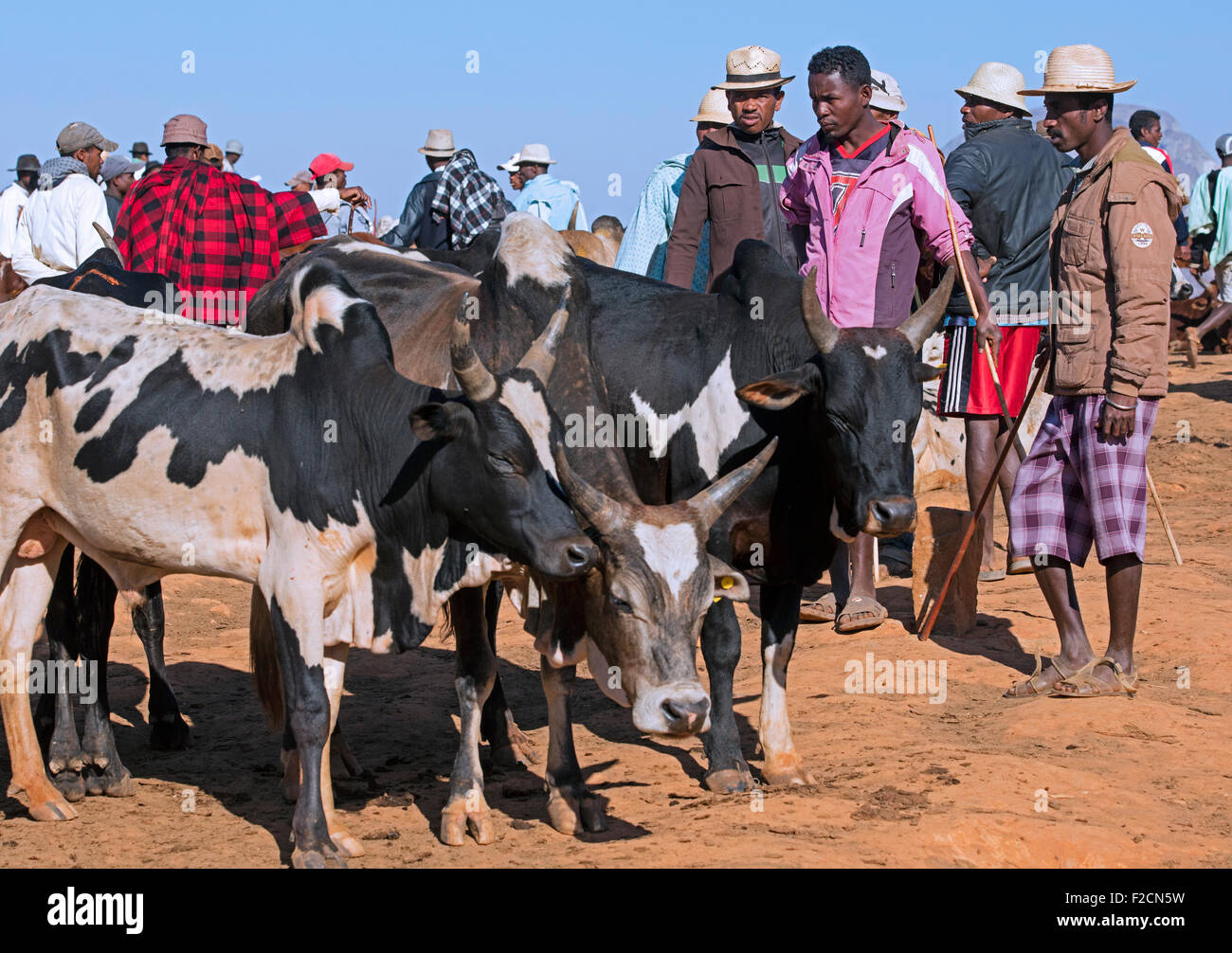 Malagasy cattle herders / cattlemen and merchants at the weekly zebu market in Ambalavao, Haute Matsiatra, Madagascar, - Stock Image