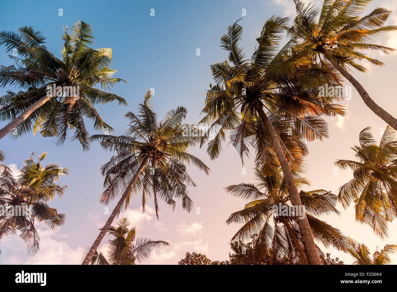 Palm trees on a warm sunny day at sunset, with warm toning - Stock Image