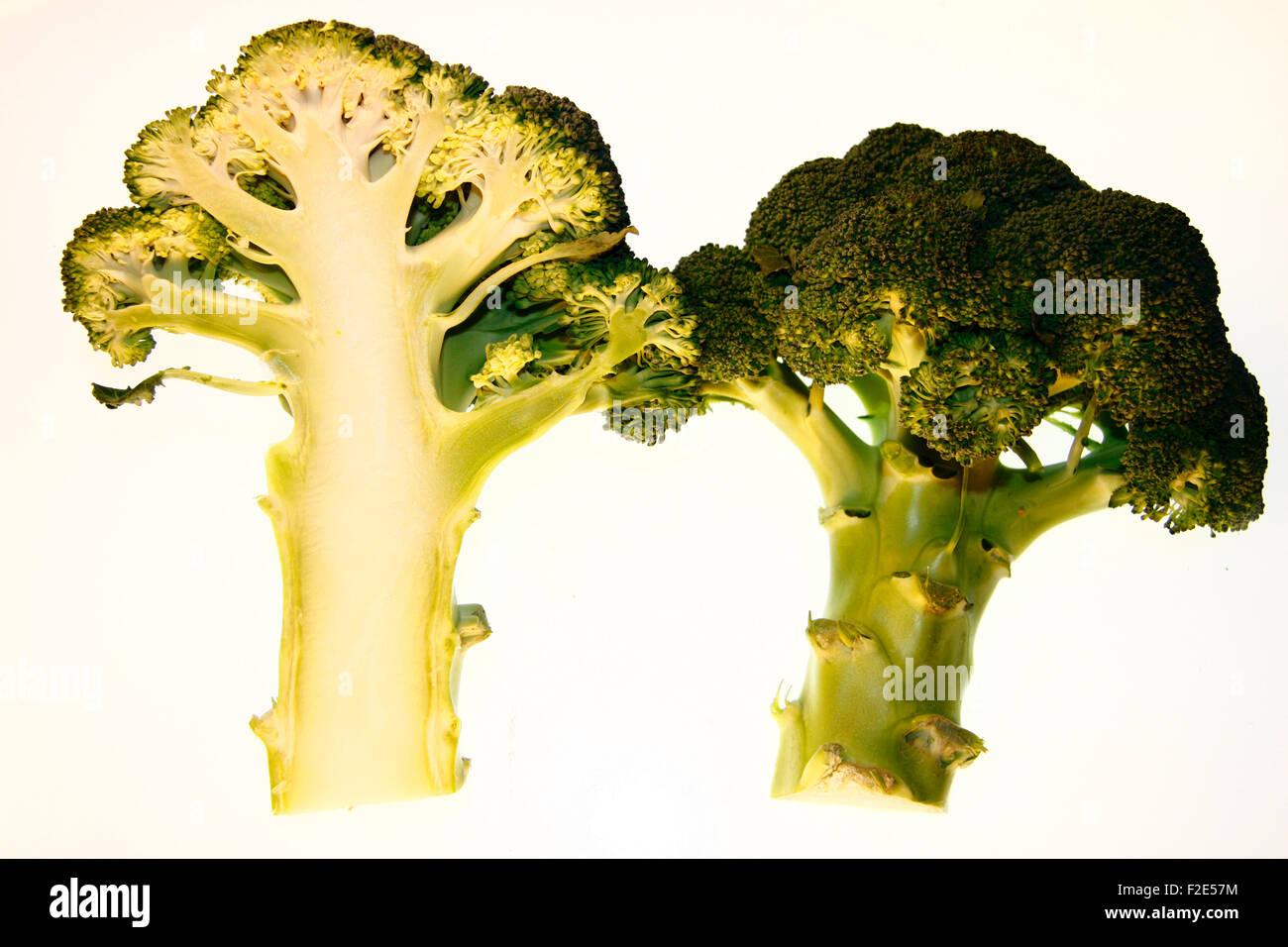 Brokkoli / broccoli - Symbolbild Nahrungsmittel. Stock Photo