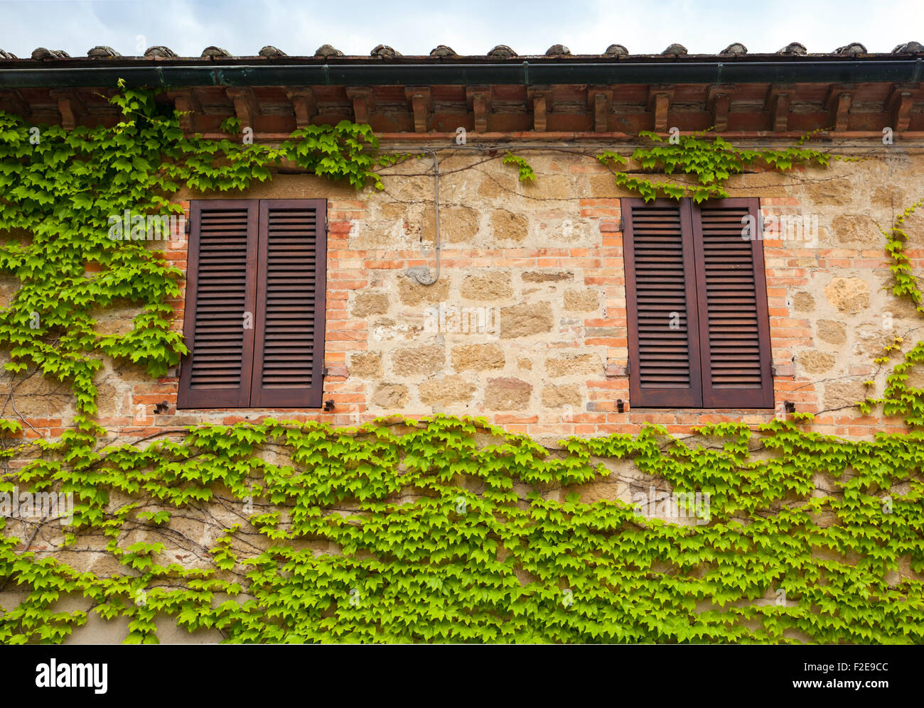 View of a wall with two windows and ivy in Tuscany. - Stock Image