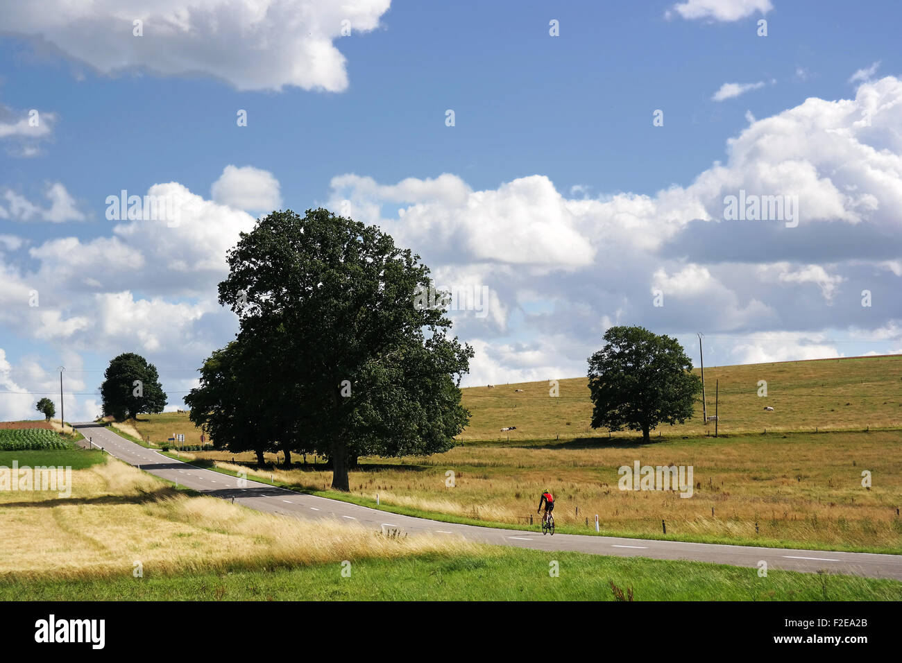 Ardennes - Stock Image