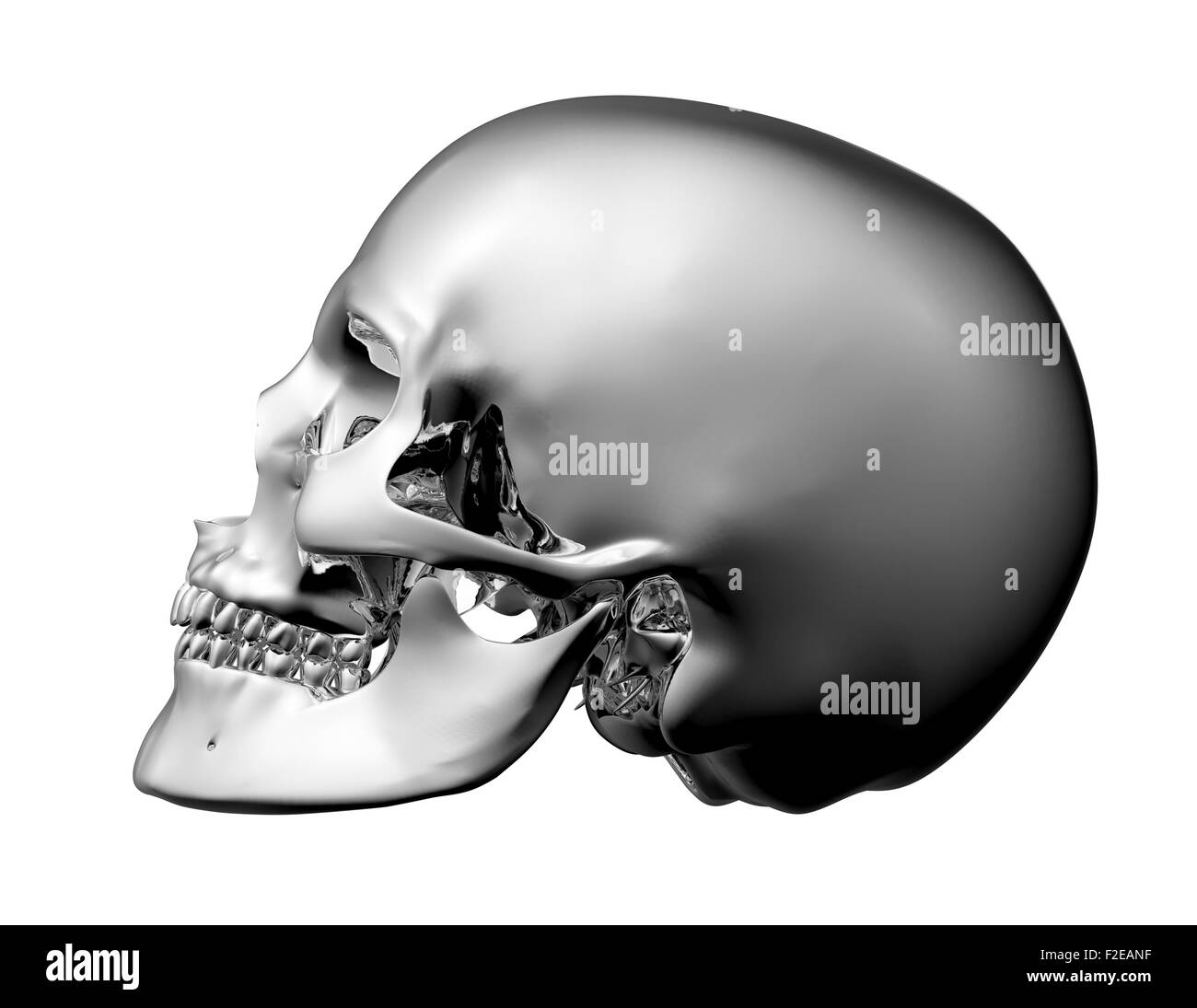 metal scull isolated on white with clipping path. - Stock Image