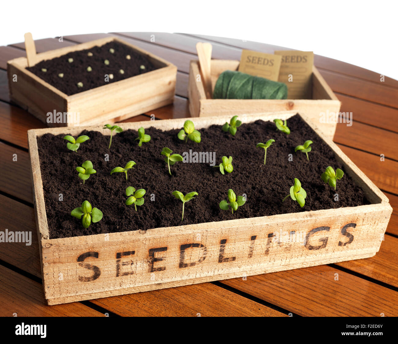 Seedling box with new growth - Stock Image