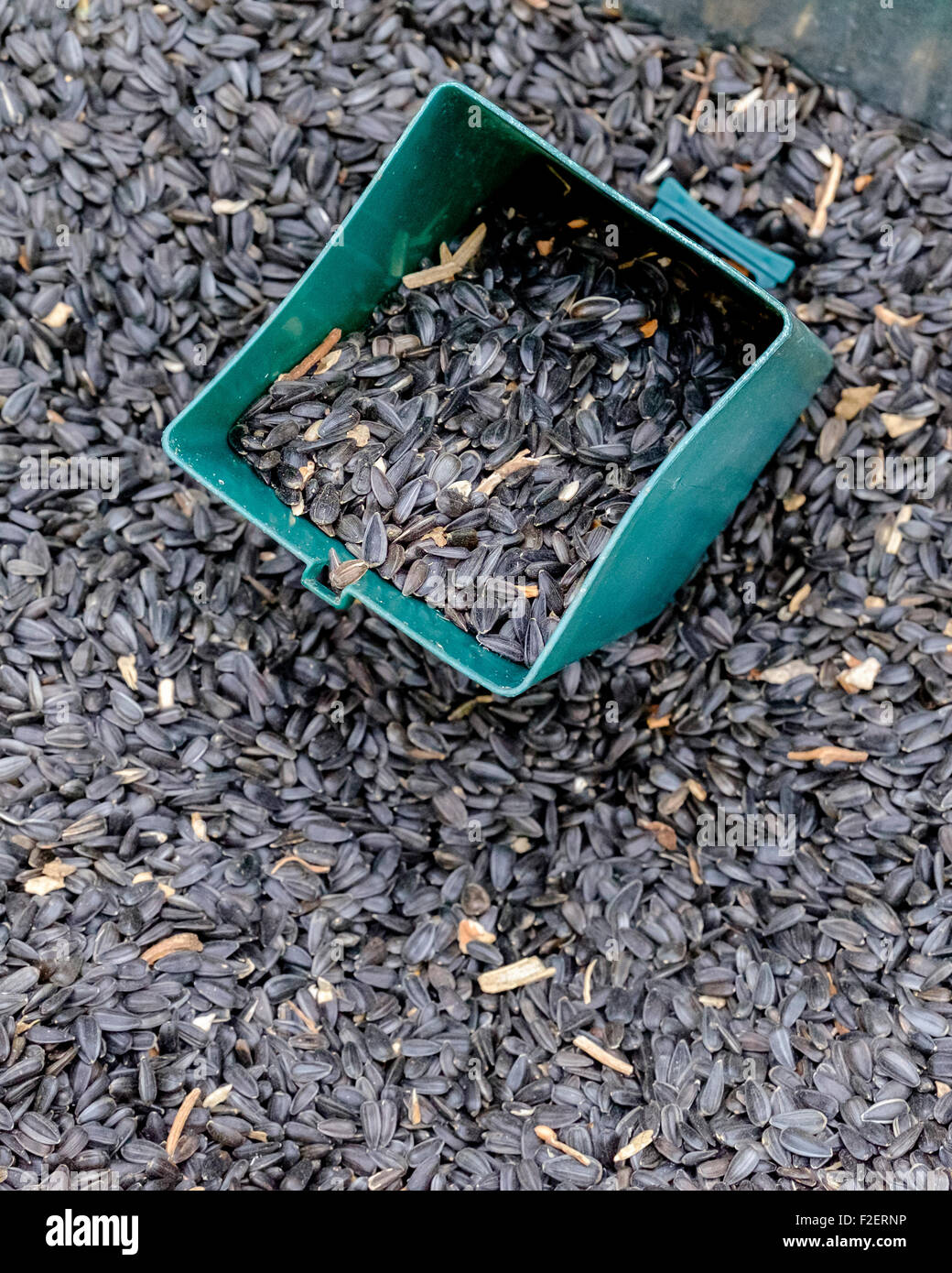 A bin full of sunflower seeds, showing a scoop. A popular seed for wild bird feeding. - Stock Image