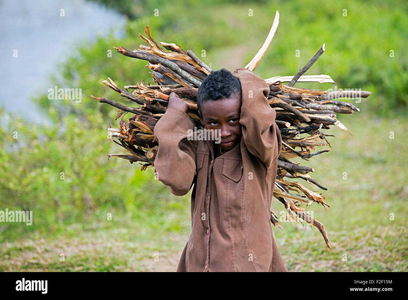 Close up portrait of Malagasy child carrying bundle of firewood on its back, Vatovavy-Fitovinany, Madagascar, Southeast - Stock Image