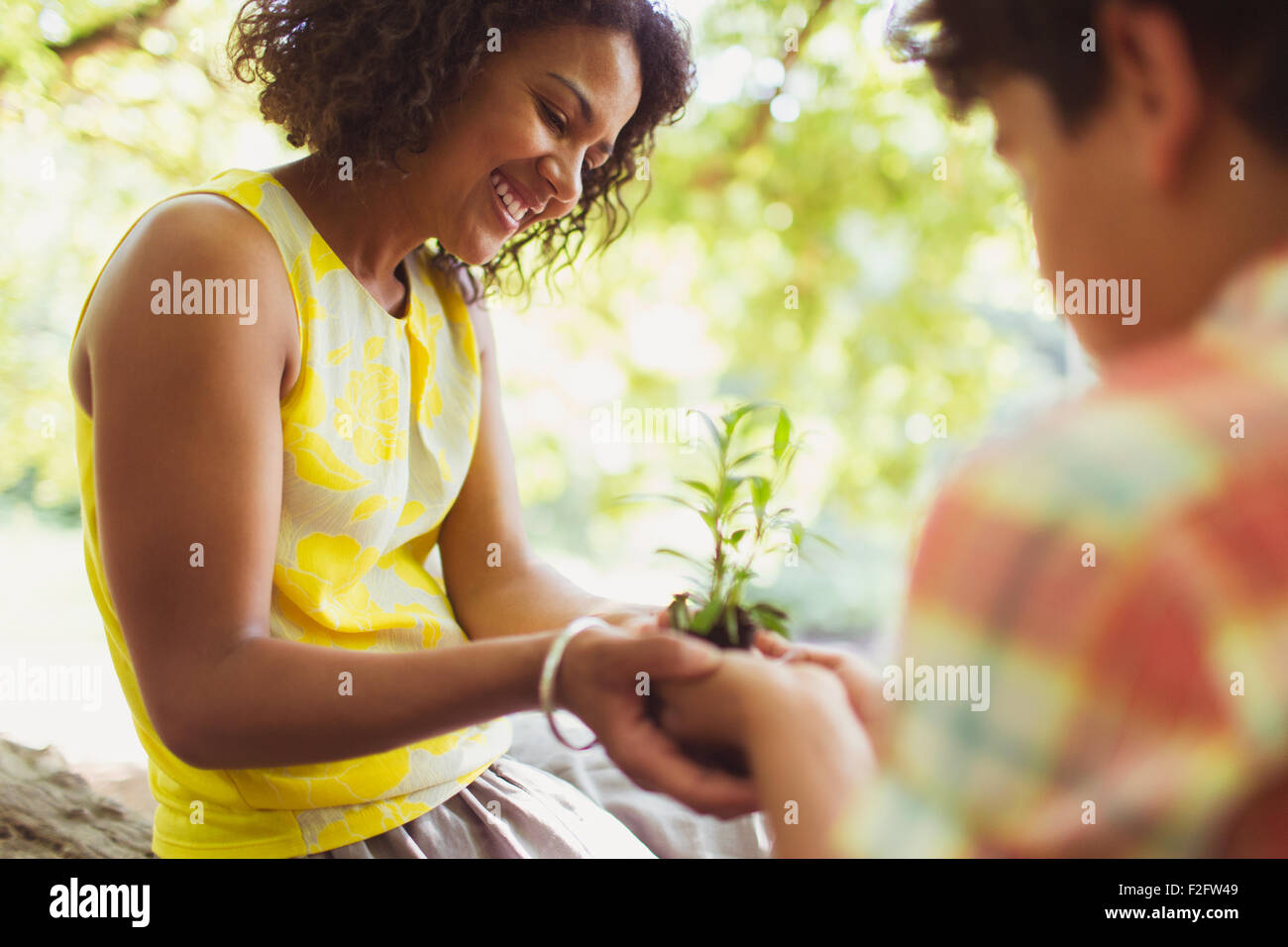 Mother and son cupping seedling outdoors - Stock Image