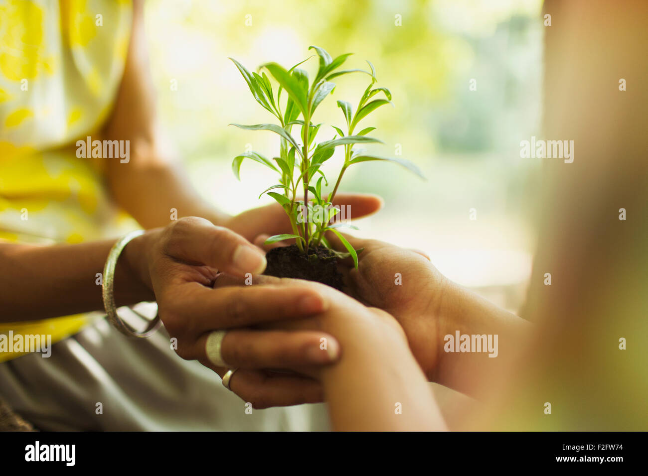 Close up mother and son cupping seedling - Stock Image