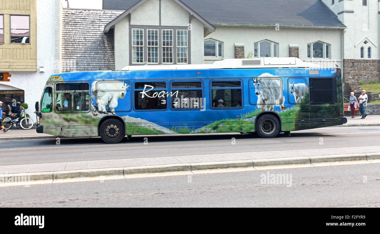 A Roam public transit transport bus with pictures of mountain goats on the side Banff National Park Alberta Canada. - Stock Image