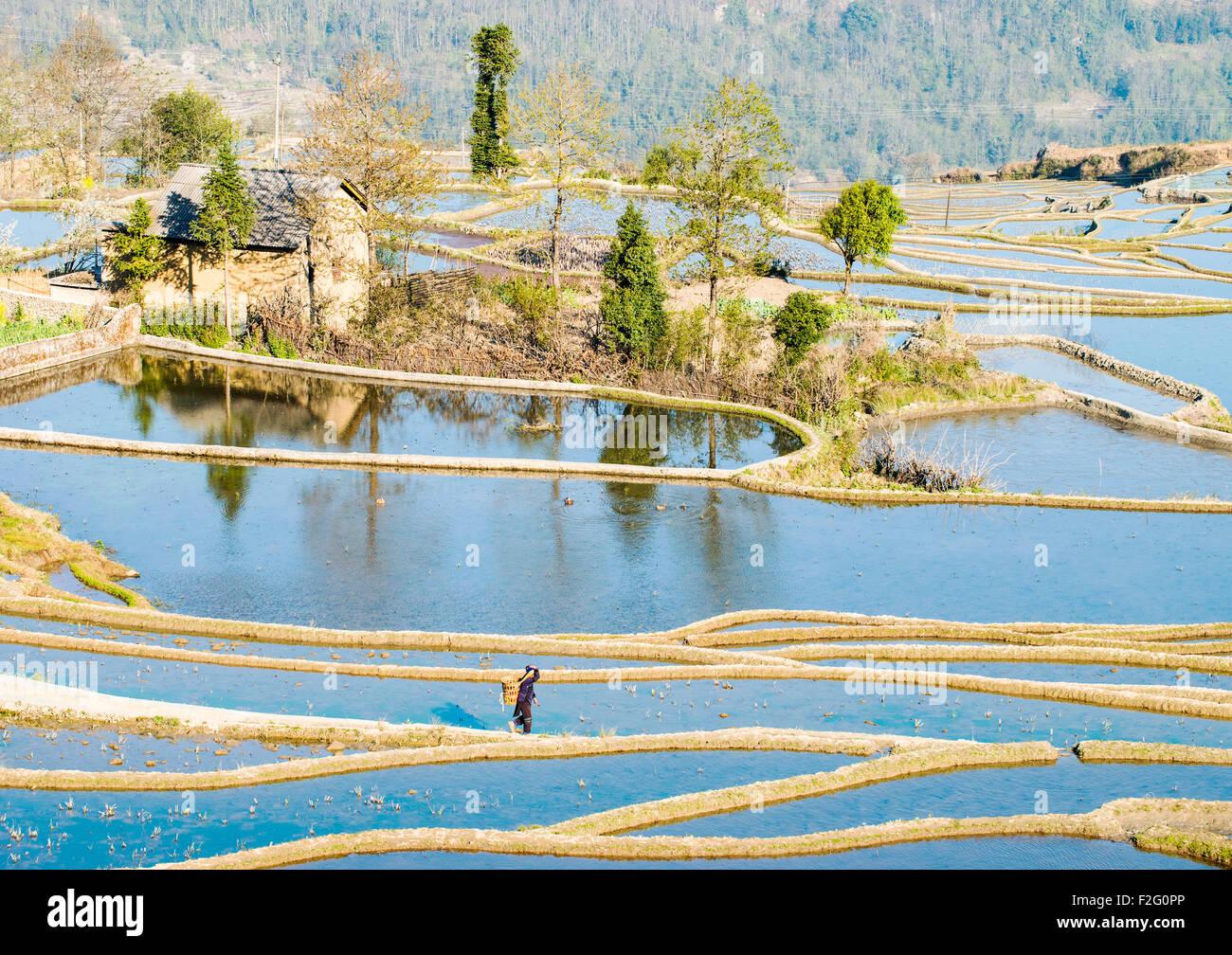 Rice terraces in Yuanyang, Yunnan, China - Stock Image