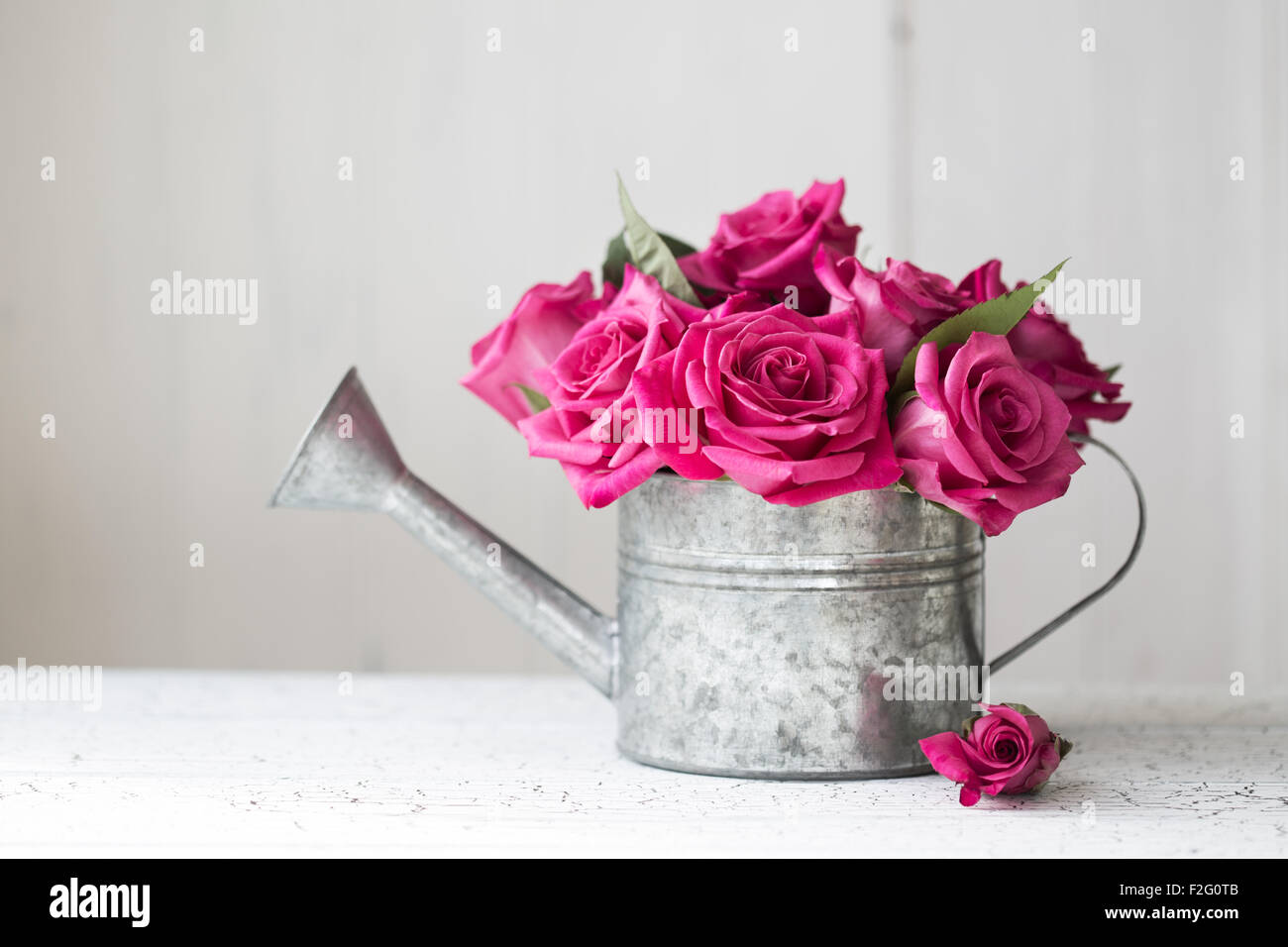 Pink Roses In A Vintage Watering Can Stock Photo 87633067 Alamy