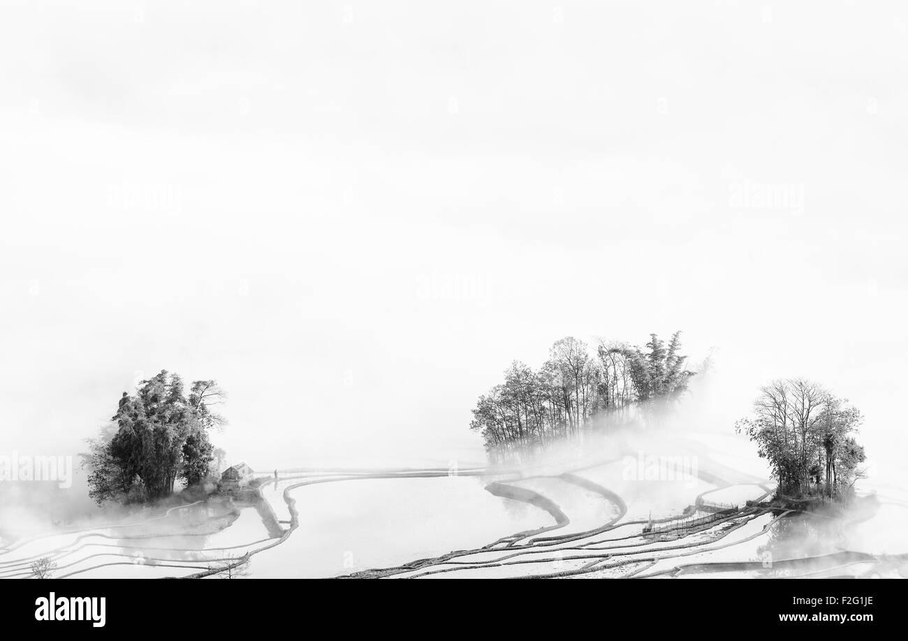 Rice terraces in the morning mist, Yuanyang, Yunnan, China - Stock Image