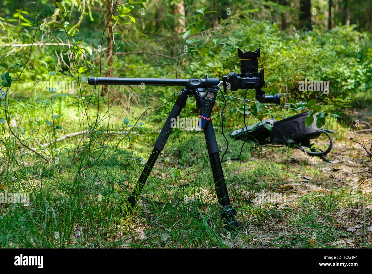 Photographic equipment established in the wood for shooting of a timelapse - Stock Image