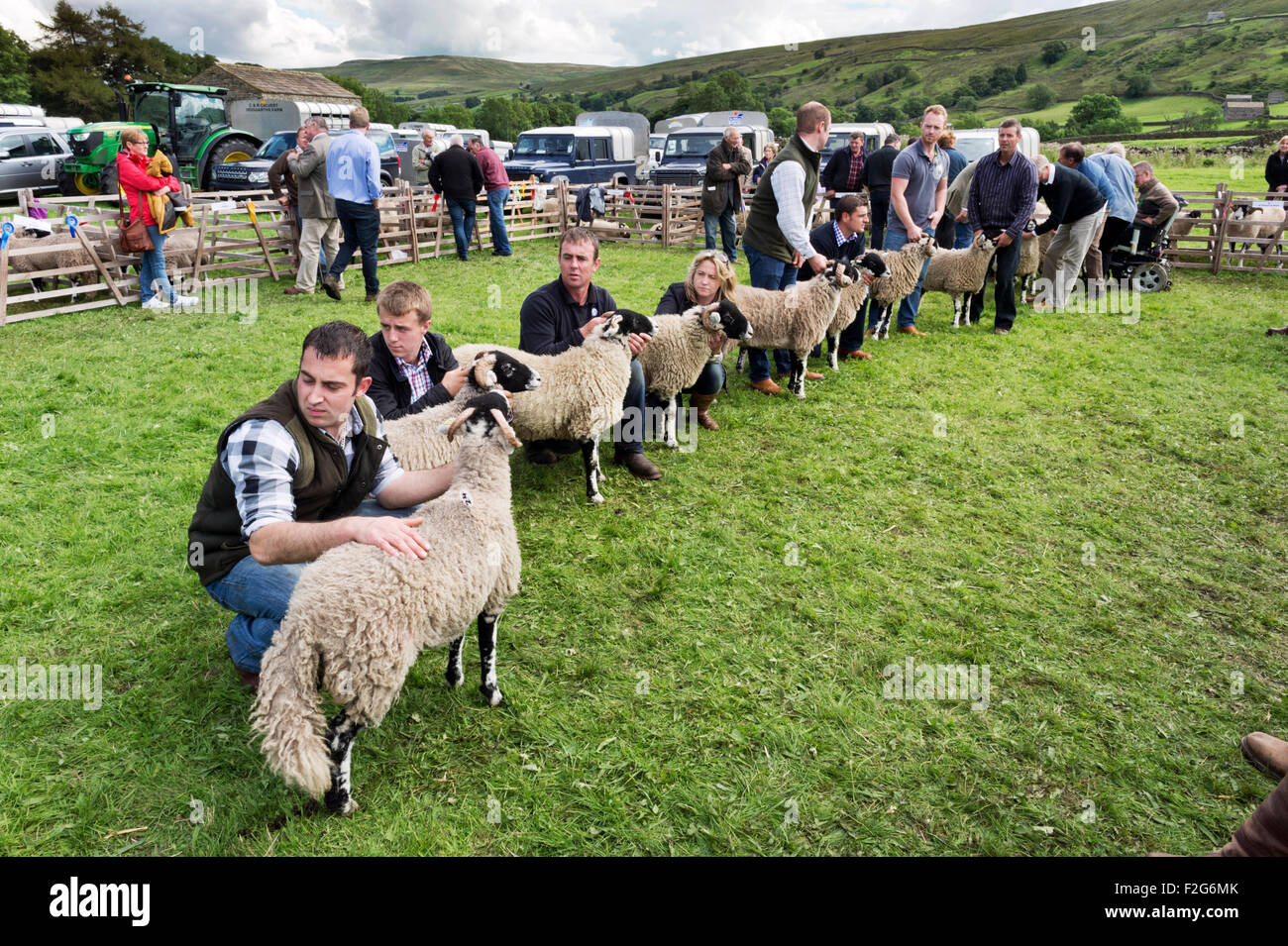 Sheep being judged, Muker Show, North Yorkshire, 2015 - Stock Image