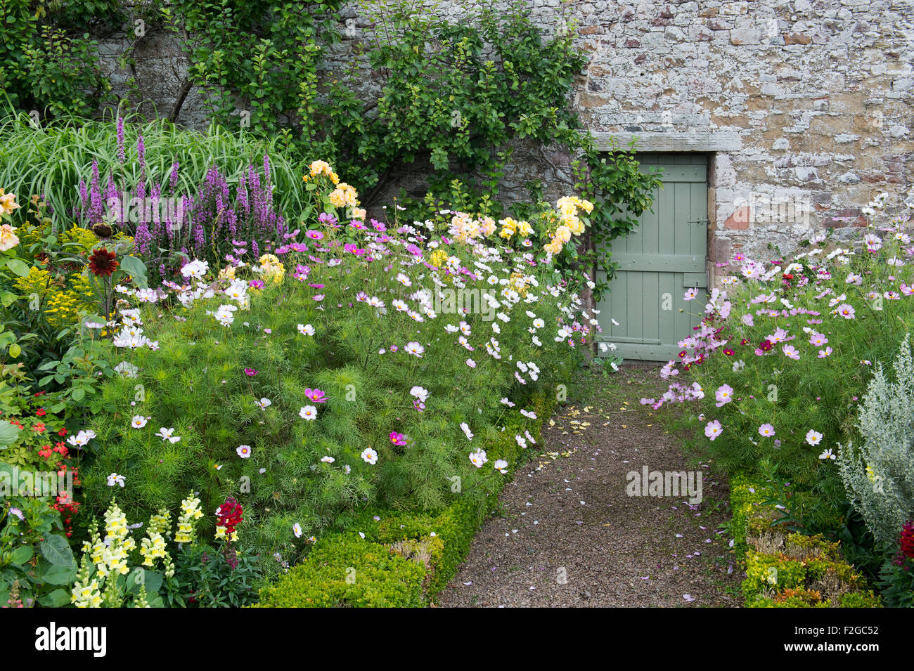 Late summer flower borders in Harmony Gardens, Melrose, Scotland - Stock Image