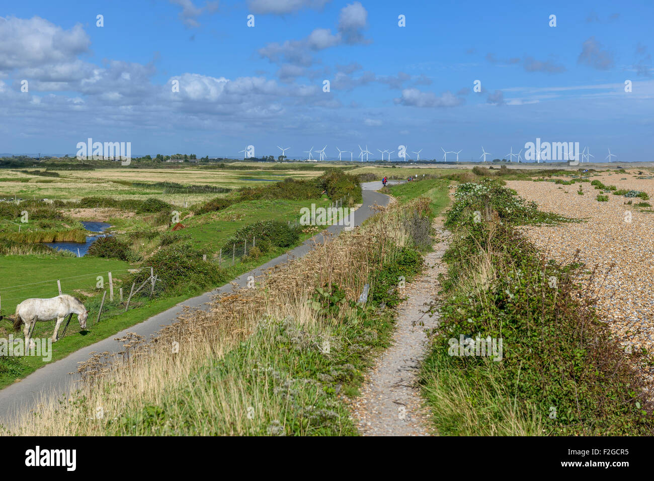 Rye harbour Nature Reserve. East Sussex. England. UK Stock Photo