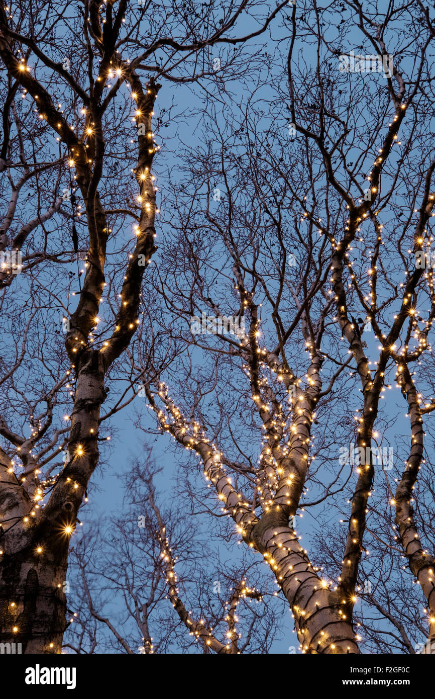 Beautiful christmas decorations in a tree - Stock Image