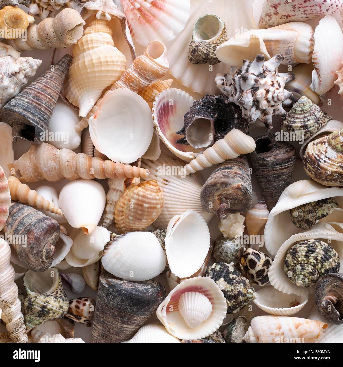 Selection of sea shells - Stock Image