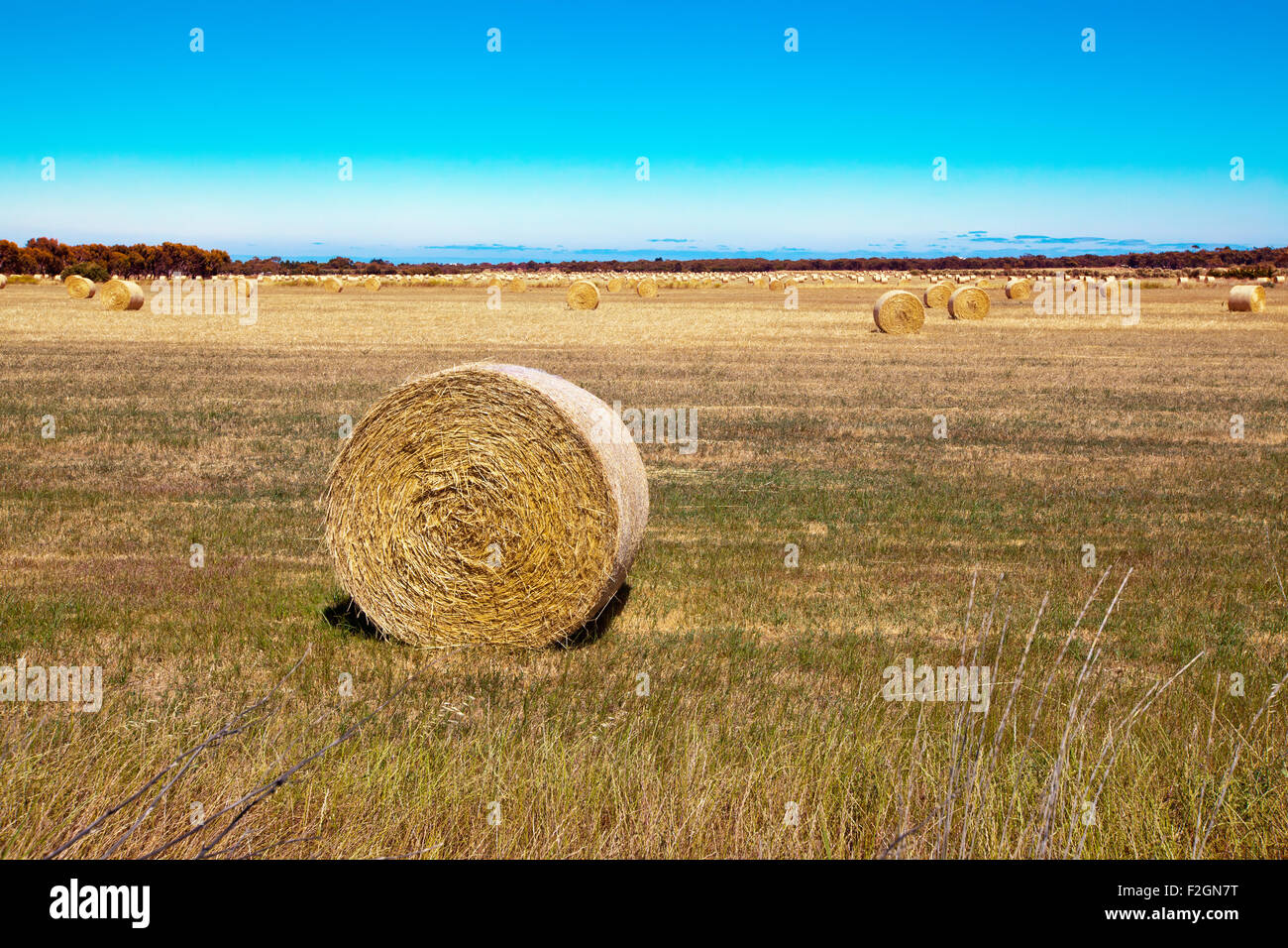 Round hay bails sit in the field after harvesting - Stock Image