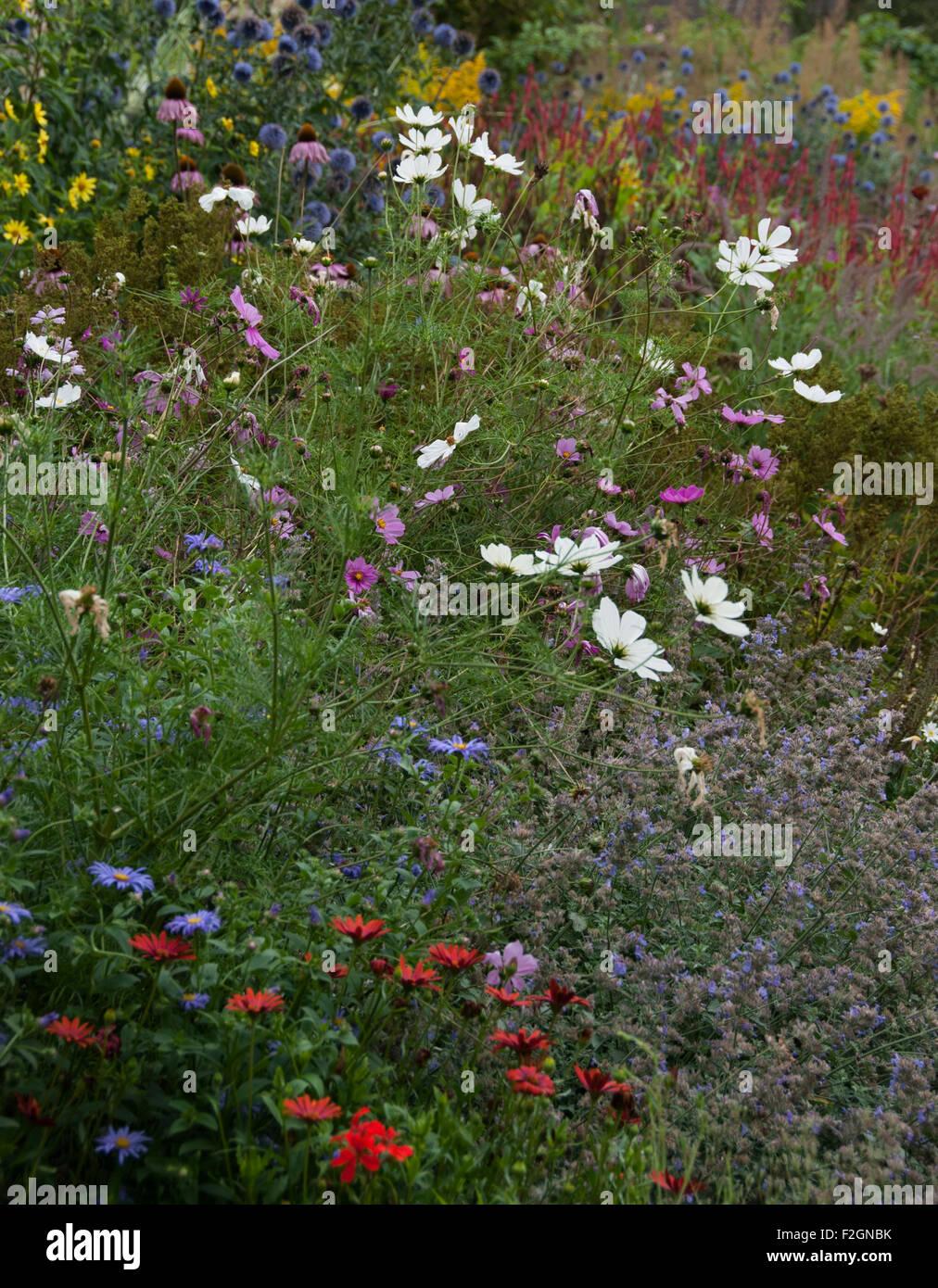 Roses In Garden: Flower Drift Stock Photos & Flower Drift Stock Images
