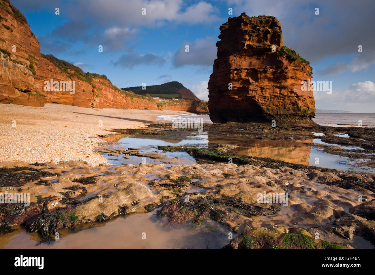 View of the red sandstone sea stacks at Ladram Bay near Sidmouth on Devon's Jurassic Coast, England, UK - Stock Image