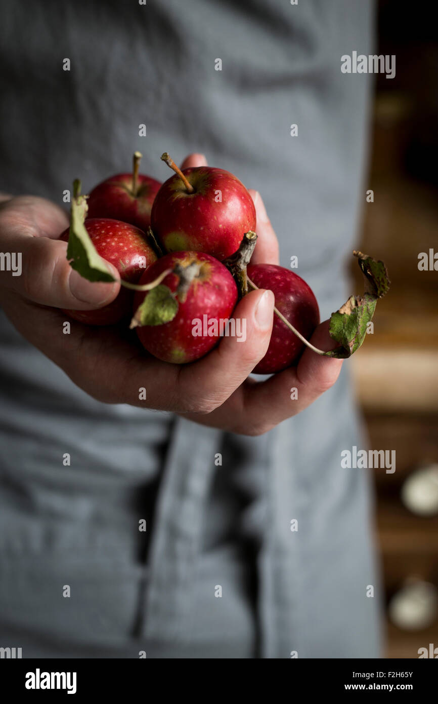 Close-up of man's hand holding apples - Stock Image