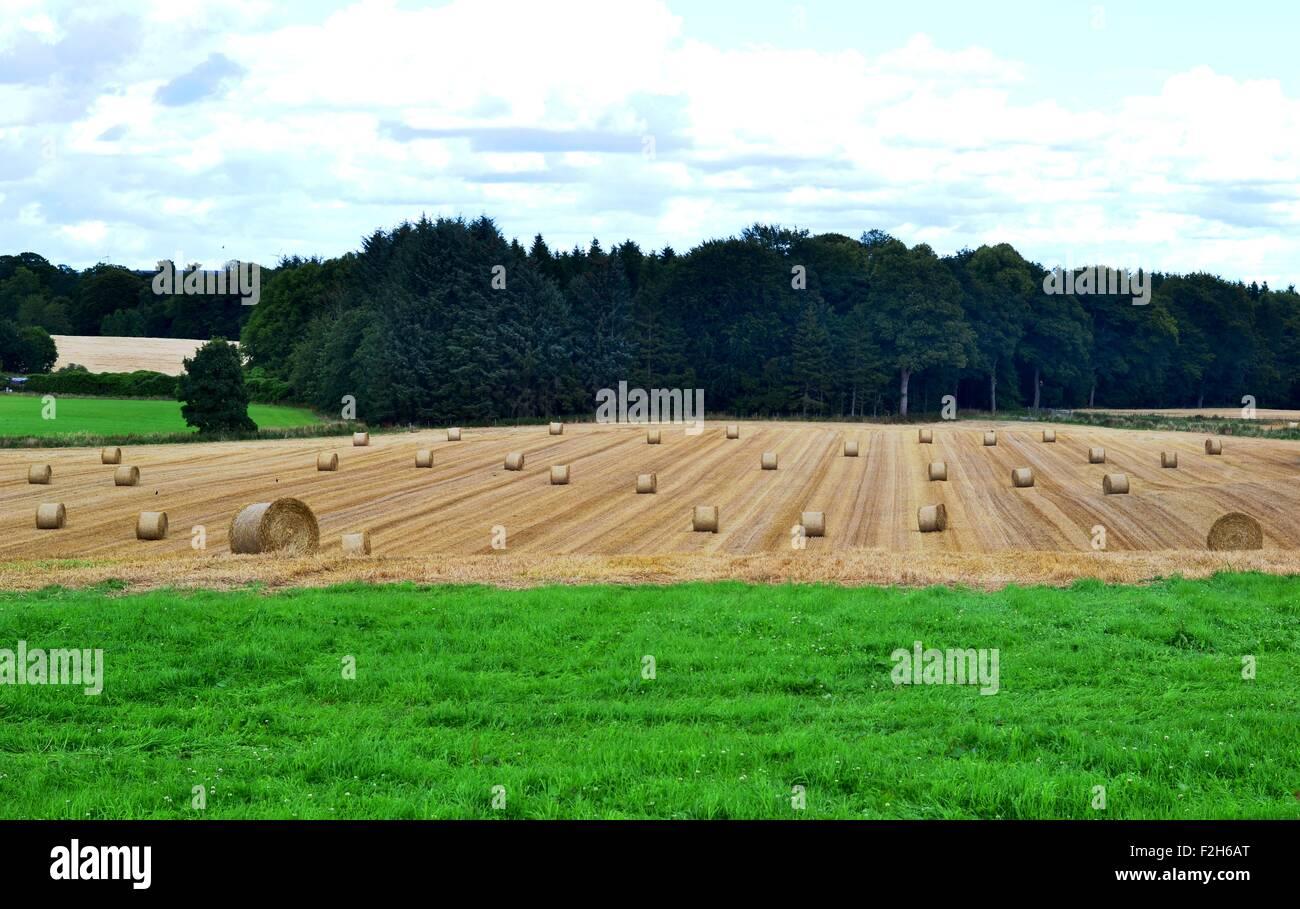 Hayfield after harvest - Stock Image