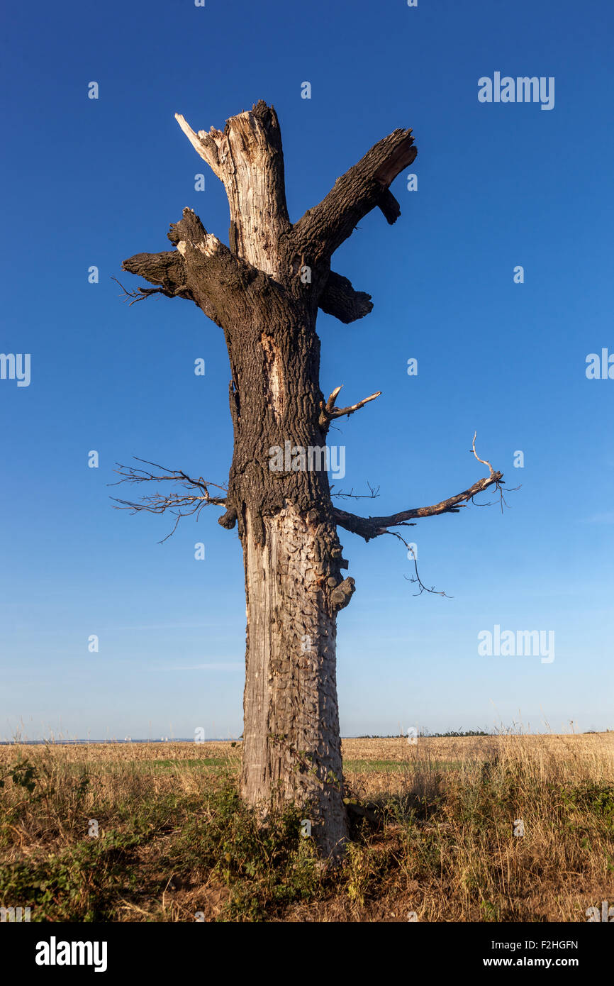 lone dead tree in the landscape torso - Stock Image