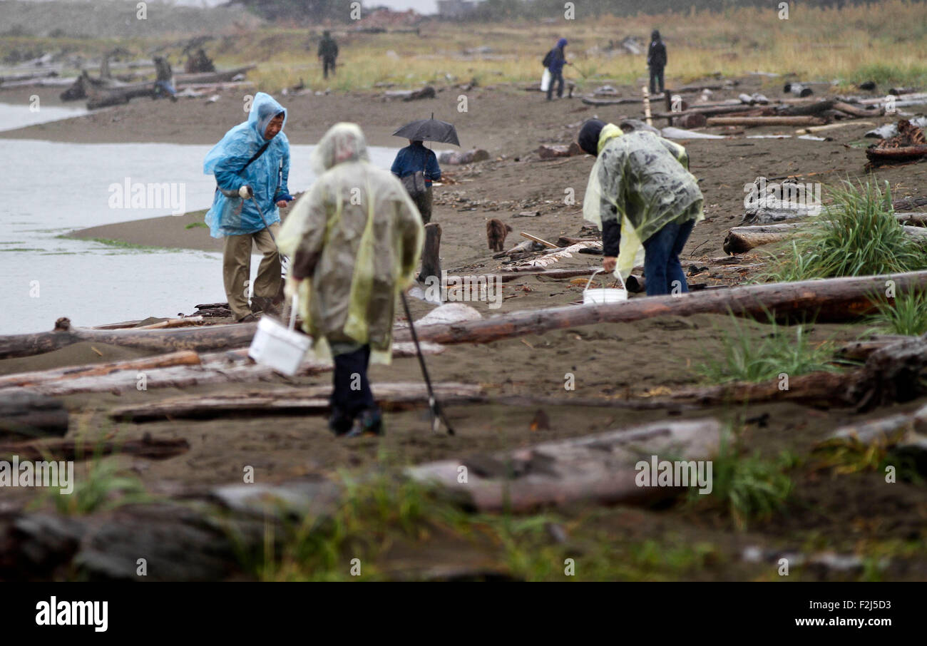 Vancouver, Canada. 19th Sep, 2015. Participants pick up garbages from the shore at Iona Beach in Richmond, Canada, - Stock Image