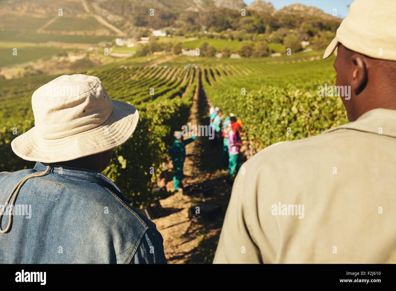 Rear view of two worker standing and looking at vineyard. People working in vineyard. Workers harvesting grapes - Stock Image