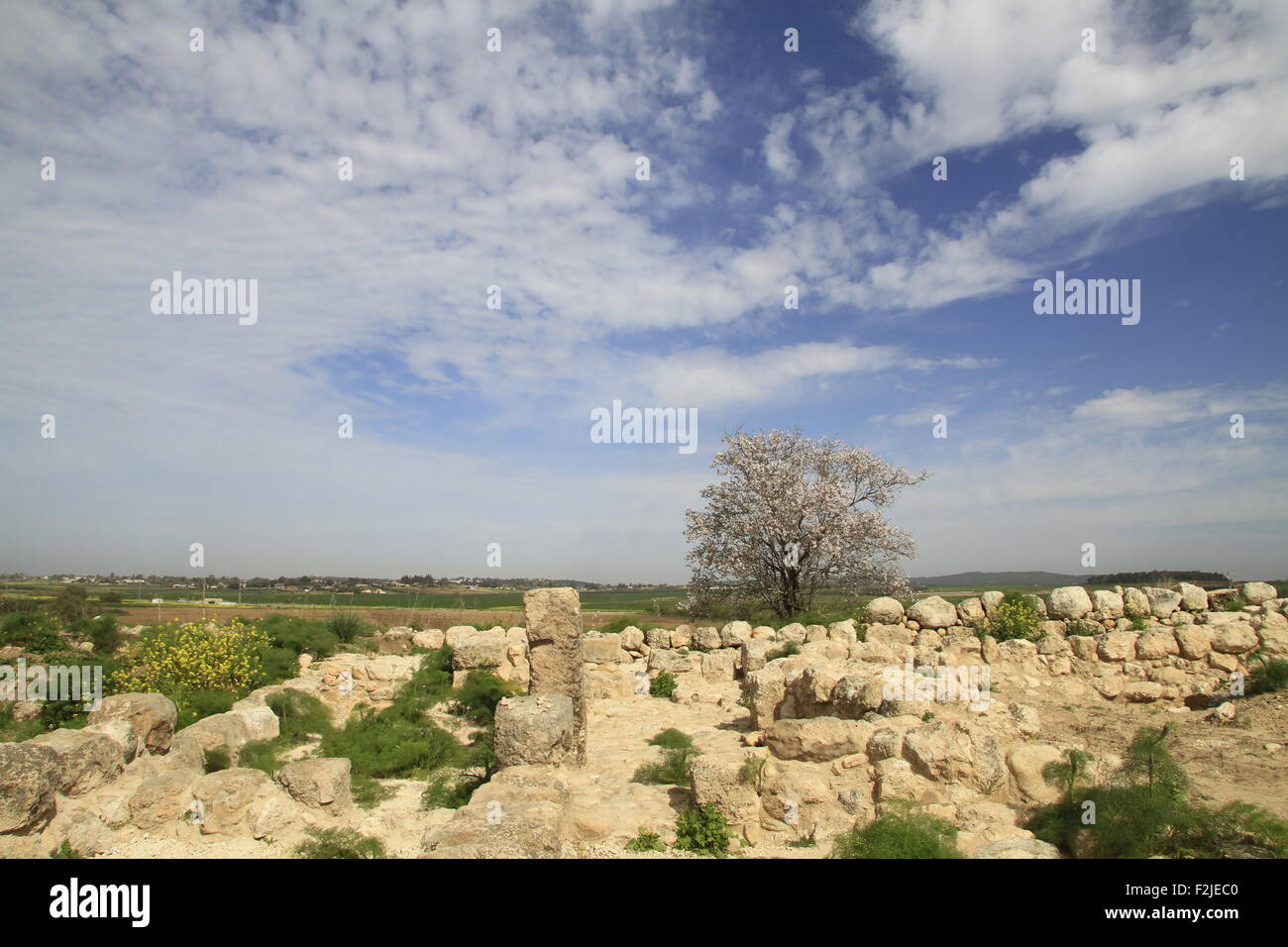 Israel, Tel Batash in the Shephelah, remain of a four room house at the Biblical city Timnah - Stock Image