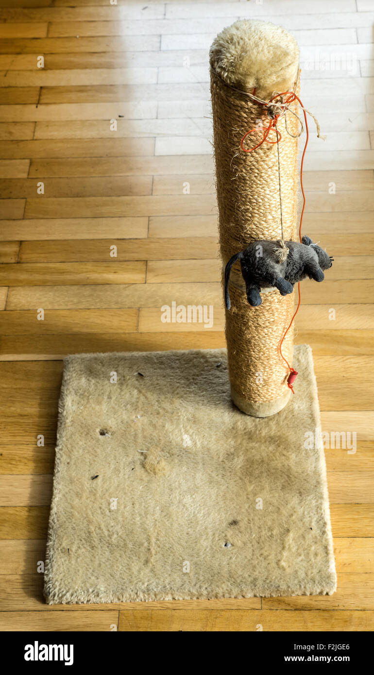 Cat toy to play with the claws - Stock Image