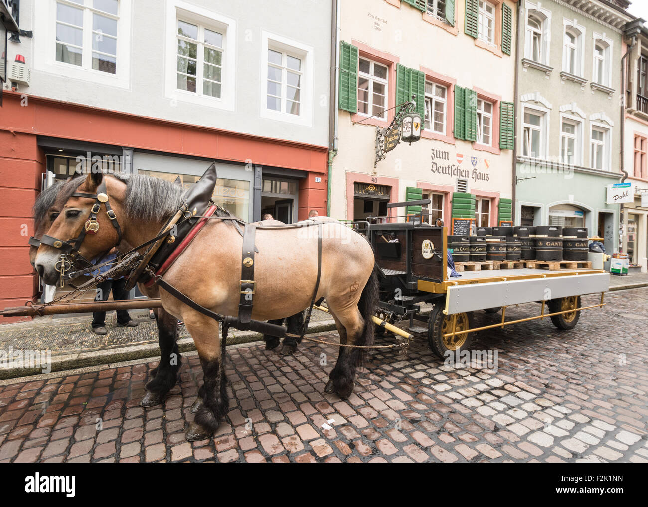 Barrels of Ganter Pils Pilsner delivered by horse on cobbled streets of Freiburg, Germany - Stock Image