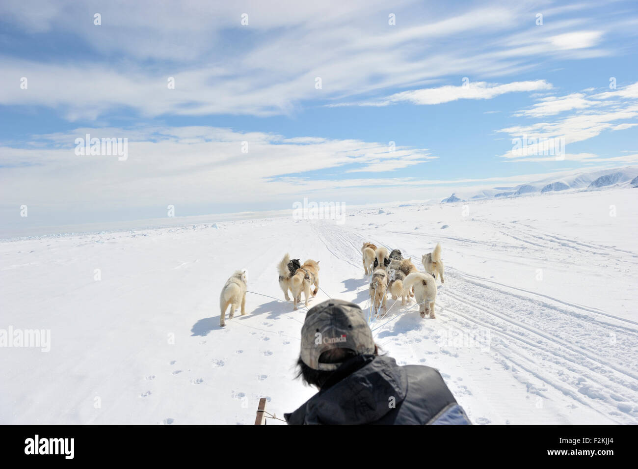 Husky sled dogs running in front of sledge with person seen from behind on sea ice, Baffin bay, Nunavut, Canada. - Stock Image