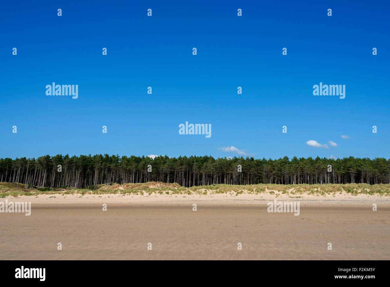 Blue sky. Strip of pine tree forest. Sand dunes. sandy beach - Stock Image