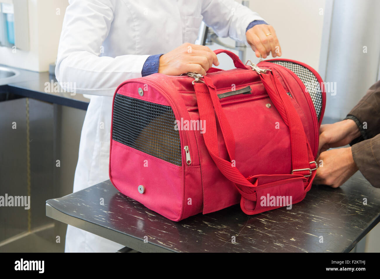 Veterinarian opening the red basket with cat - Stock Image