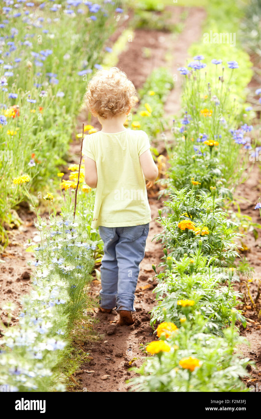 Back view of little girl walking through flower beds - Stock Image