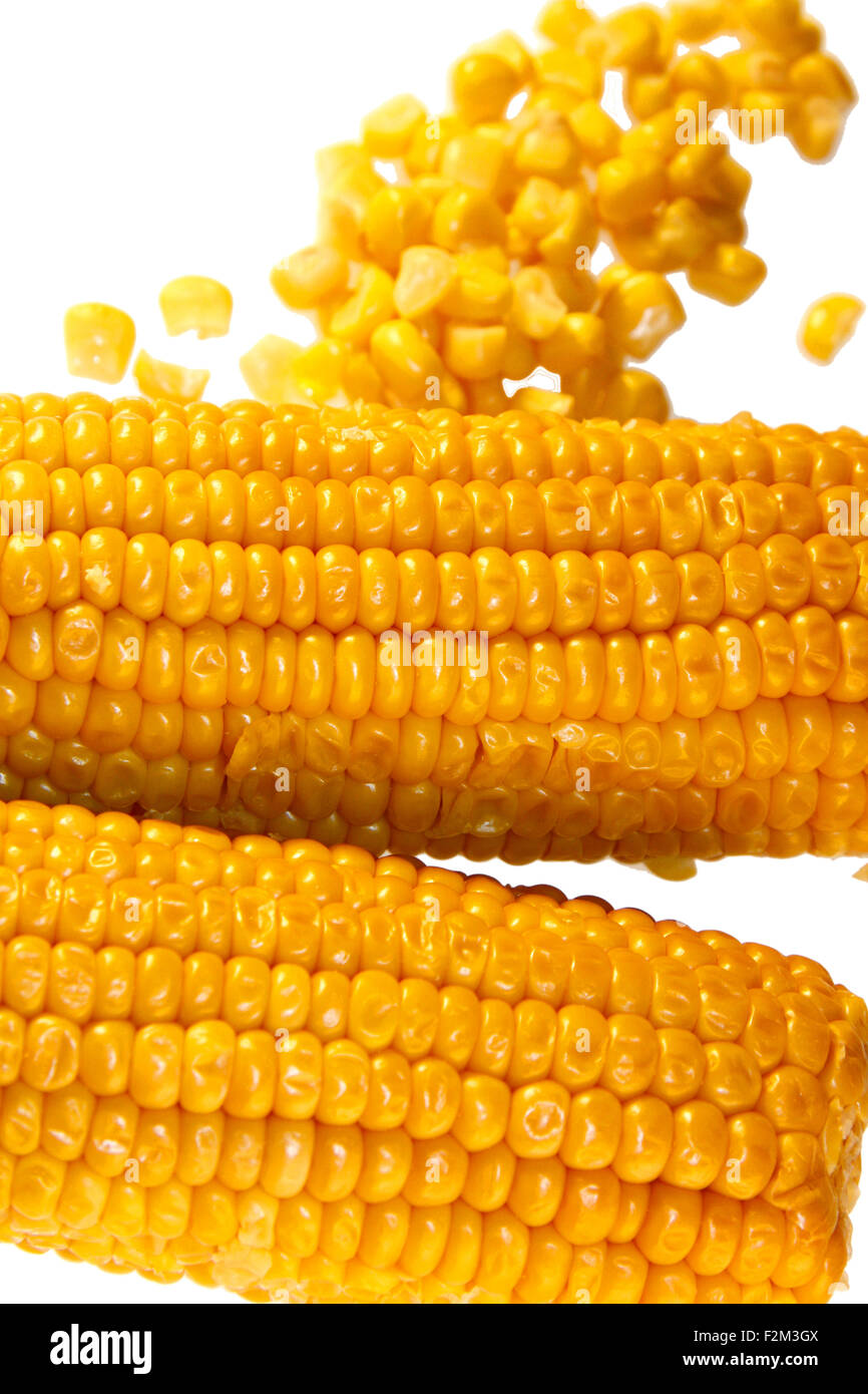 Maiskolben/ maize/ corn cob - Symbolbild Nahrungsmittel. Stock Photo