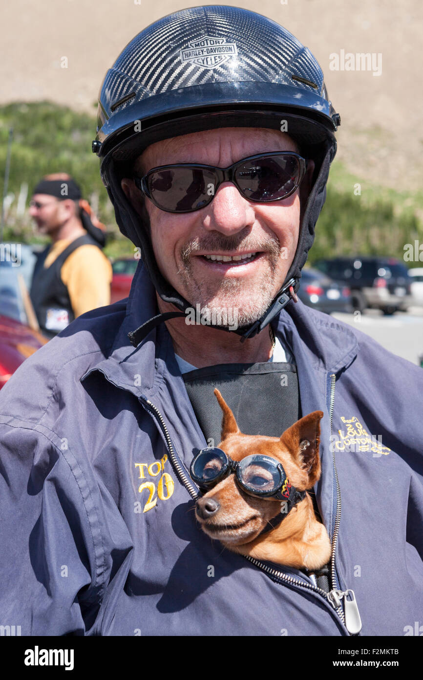 Harley-Davidson helmeted biker and his biker Chihuahua. The dog is safely tucked into his master's jacket and - Stock Image