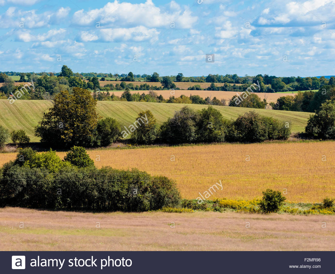 Farm fields and hedgerows on the drumlin hills of Northumberland County in late summer in Southern Ontario Canada - Stock Image