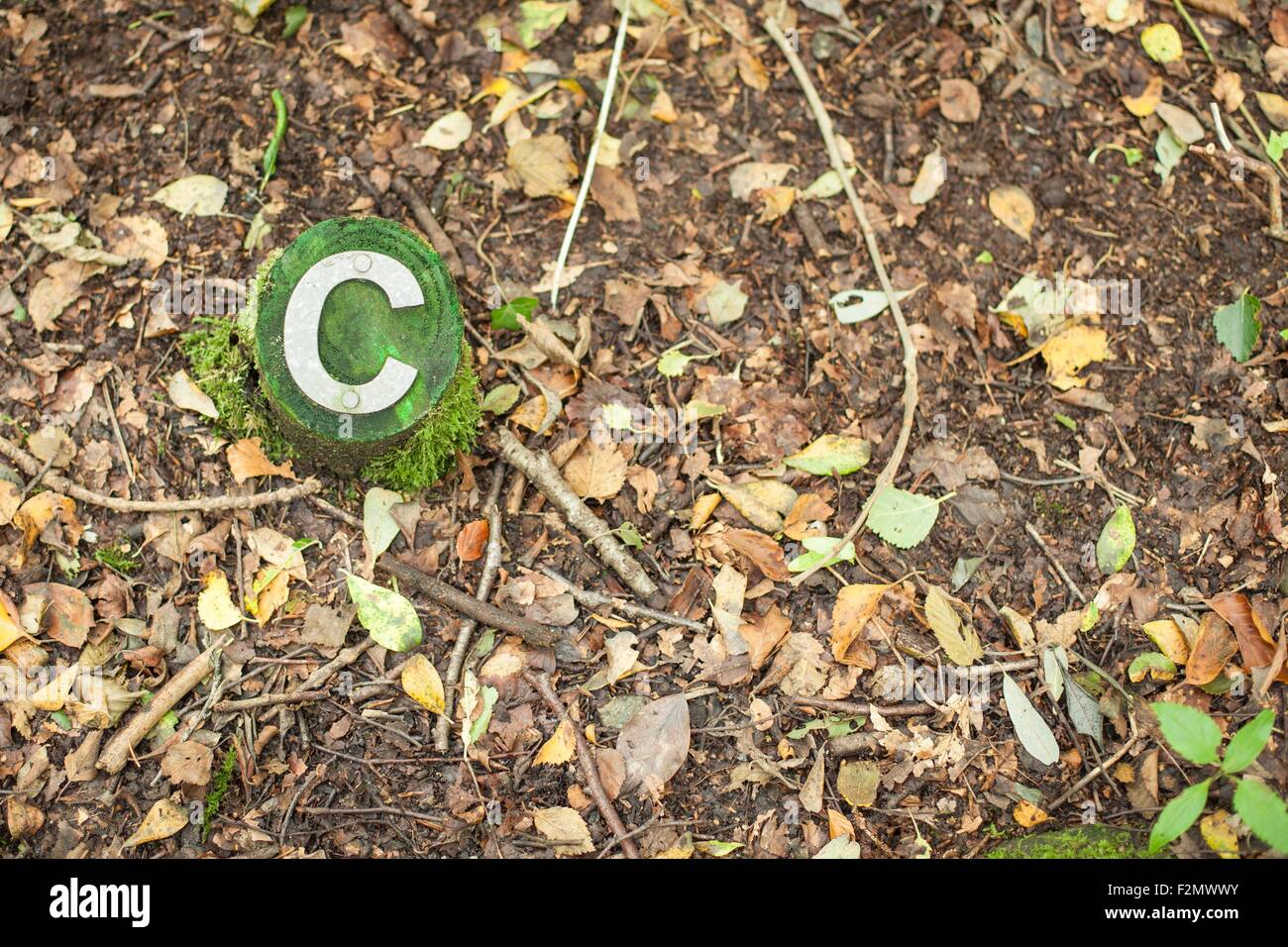 The letter C on a stump in the forest - Stock Image