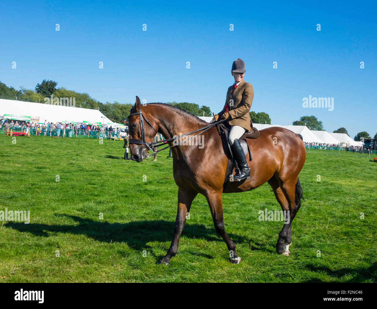A Prize winning Cleveland Bay Horse ridden by Ms Anne Hebron at the Stokesley Agricultural Show 2015 - Stock Image