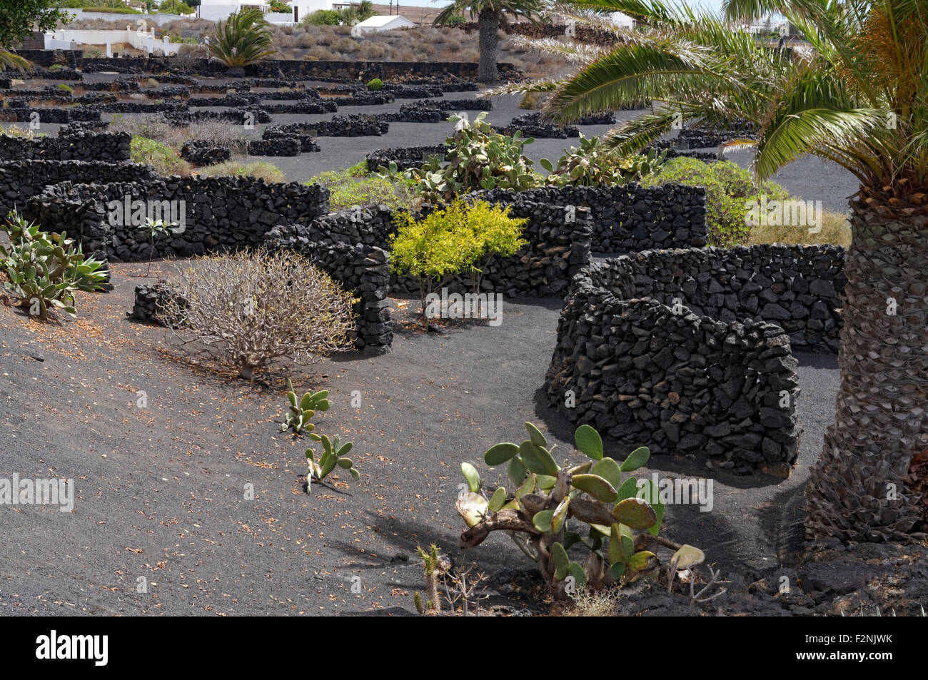 Zocos semi cirular walls of lava used to protect plans from the prevailing wind, Fundacion Cesar Manrique, Teguise, - Stock Image